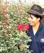 FRESH CUT ROSES direct from the farm, we will cut your roses after your Purchase Order, farm personnel will take care from cut to first packaging and delivery to your florist shop anywhere in USA and Canada... We will support your Florist Shop each season, valentine, easter, mother, summer, thanksgiving and Christmas with the most fresh flowers direct from the Farms at WHOLESALE PRICING